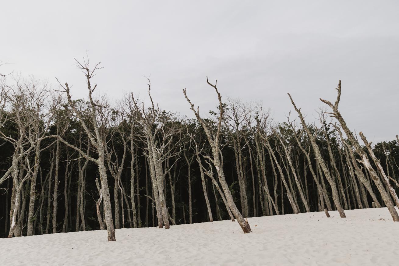 #sesjanadmorzem #bałtyk #łeba #plenerfotograficzny #morze #piasek #słońce #summertime #sessions #photo
