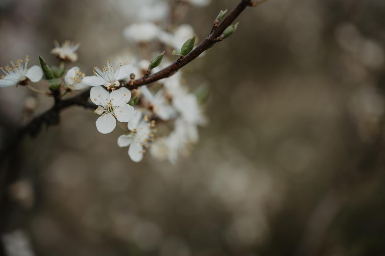 #wiosna #kwiaty #miłość